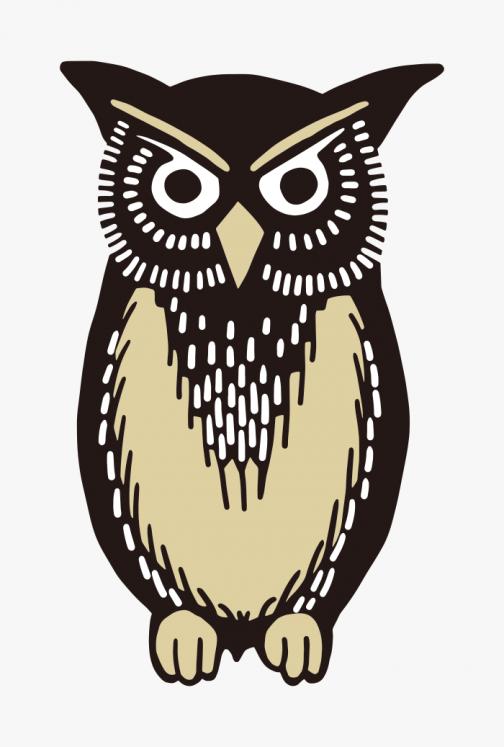 Owl Illustration / Drawing