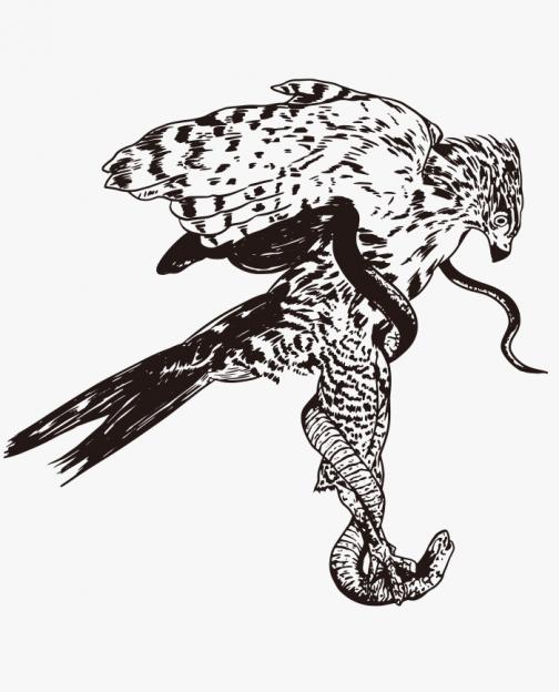Eagle Hunting Snakes / Drawing