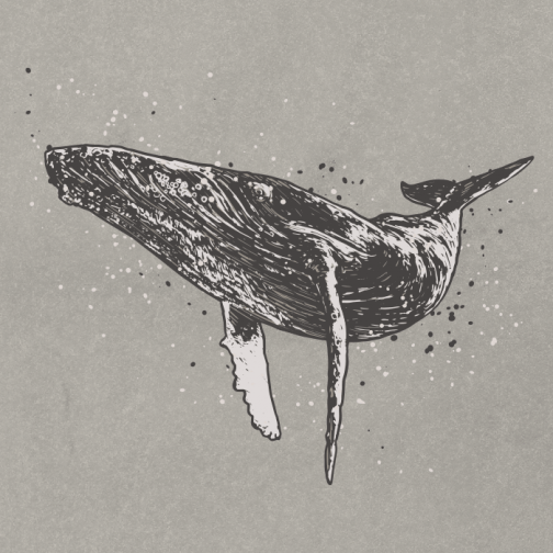 Humpback whale / Drawing