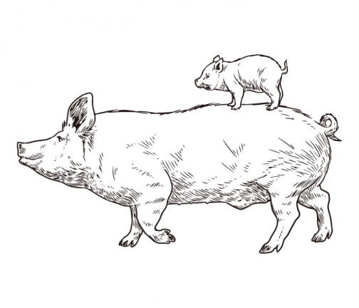 Pig parent and child 01 / Drawing
