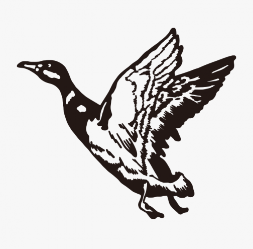 Retro style duck drawing
