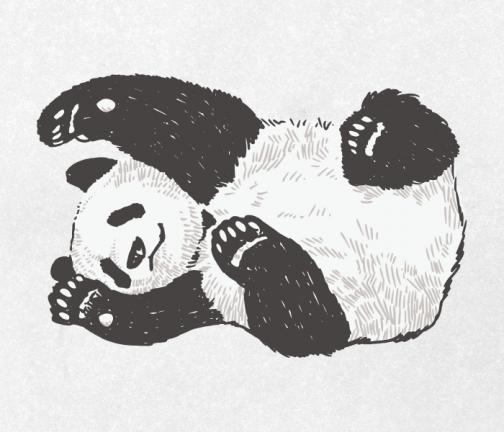 Panda drawing 01