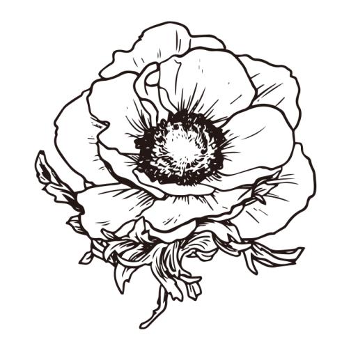 Anemone / Flower Drawing