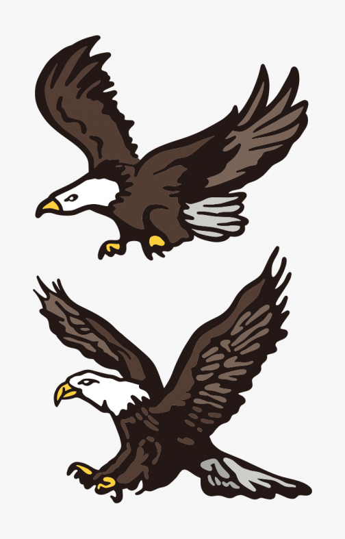 A set of eagle drawing