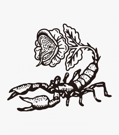 Scorpion and Cannibal Flower - Drawing